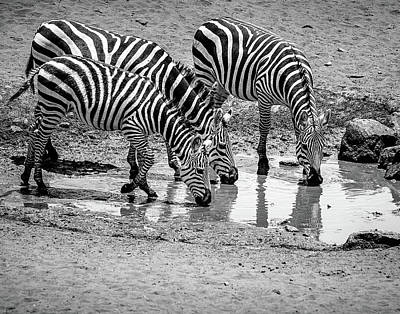 Poster featuring the photograph Zebras At The Watering Hole by Marion McCristall