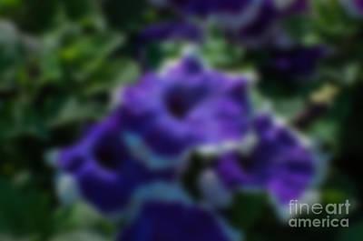 Blurred Seasonal Flower With Dark Background Poster by Rudra Narayan  Mitra