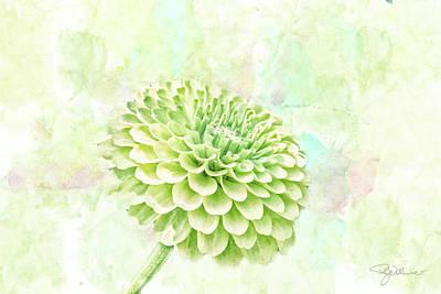 10891 Green Chrysanthemum Poster by Pamela Williams