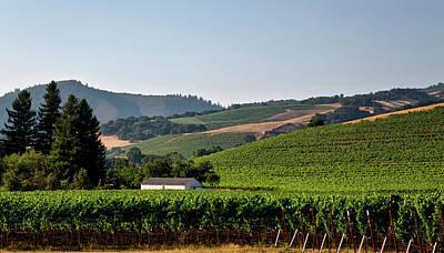 California Vineyard Poster