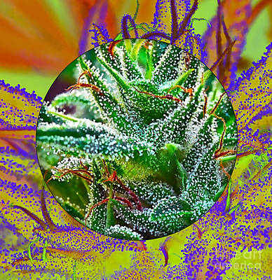 Cannabis 420 Collection Poster by Marvin Blaine