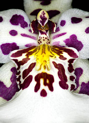 Exotic Orchid Flower Poster
