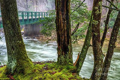 Back Fork Of Elk River Poster