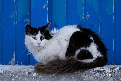 Cat On A Greek Island Poster by Jean-Louis Klein & Marie-Luce Hubert