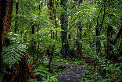 Poster featuring the photograph Forest Boardwalk by Les Cunliffe