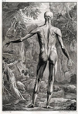 18th Century Anatomical Engraving Poster