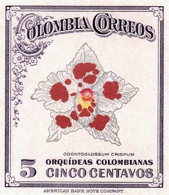 1947 Colombia Odontoglossum Orchid Stamp Poster