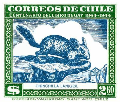 1948 Chile Long Tailed Chinchilla Postage Stamp Poster by Retro Graphics