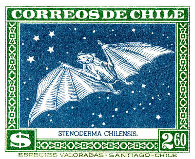 1948 Chile Red Fruit Bat Postage Stamp Poster by Retro Graphics