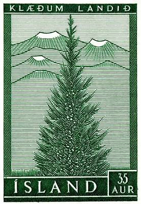 1957 Iceland Spruce Tree Postage Stamp Poster