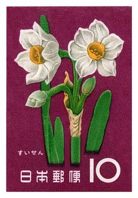 1961 Japan Narcissus Postage Stamp Poster