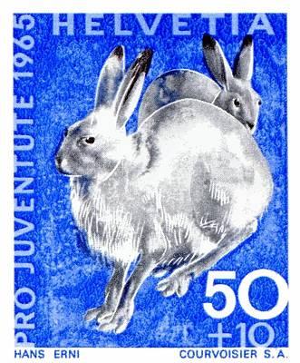 1965 Switzerland Alpine Hare Postage Stamp Poster by Retro Graphics