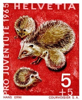 1965 Switzerland Hedgehogs Postage Stamp Poster by Retro Graphics