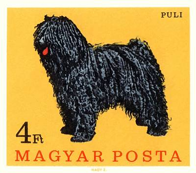 1967 Hungary Puli Dog Postage Stamp Poster by Retro Graphics