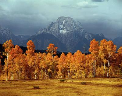 1m9235 Mt. Moran In Autumn Poster