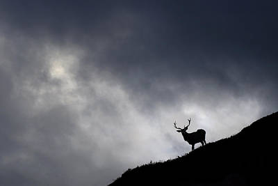 Stag Silhouette Poster