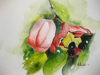 Ackee  Poster by Wandeka Gayle