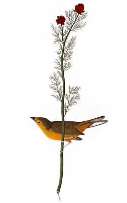 Audubon: Warbler, (1827) Poster by Granger