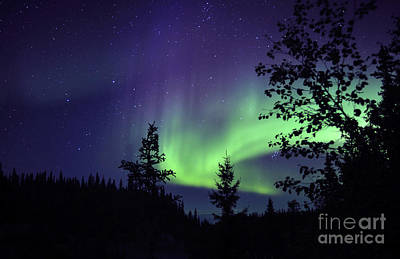 Aurora Borealis Above The Trees Poster by Jiri Hermann