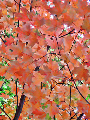 Autumn Foliage 1 Poster by Lanjee Chee