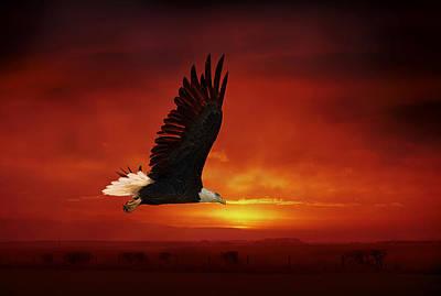 Bald Eagle Poster by Gouzel -