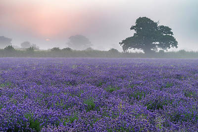 Beautiful Dramatic Misty Sunrise Landscape Over Lavender Field I Poster by Matthew Gibson
