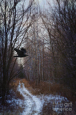 Black Bird Flying By In Forest Poster by Sandra Cunningham