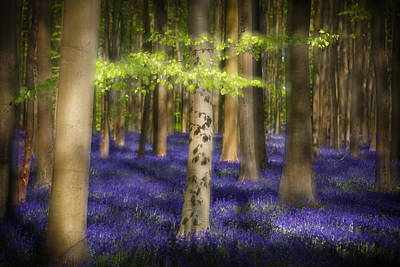Bluebell Spring Wildflowers Poster