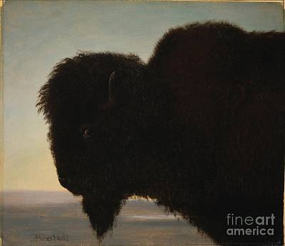 Buffalo Head Poster by Celestial Images