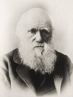 Charles Darwin 1809 1882 English Poster by Vintage Design Pics