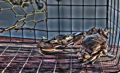 2 Crabs In Trap Poster