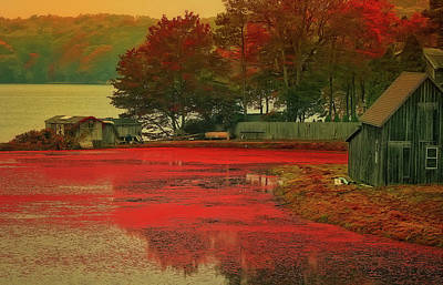 Cranberry Farm Poster by Gina Cormier