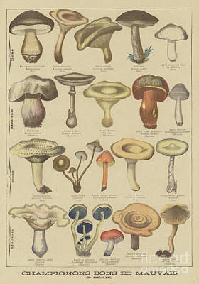 Edible And Poisonous Mushrooms Poster