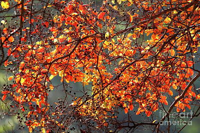 Poster featuring the photograph Fall Leaves by Nicholas Burningham