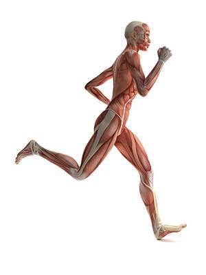 Female Muscles, Artwork Poster