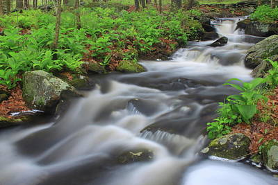 Forest Stream In Spring Poster by John Burk