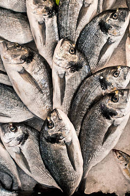 Fresh Fish Poster by Tom Gowanlock