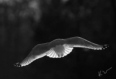 Glowing Wings Poster by Karol Livote