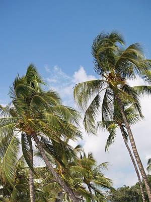 Hawaiian Breeze Poster by Athala Carole Bruckner