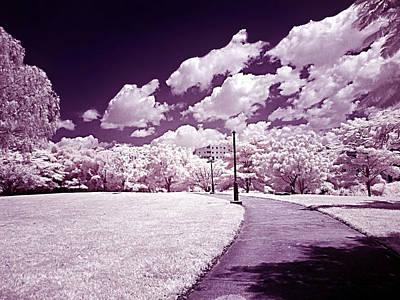 Infrared Garden Poster by Galeria Zullian  Trompiz