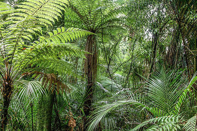 Poster featuring the photograph Jungle Ferns by Les Cunliffe