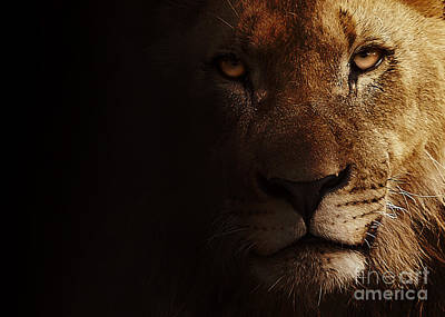 Poster featuring the photograph Lion by Christine Sponchia