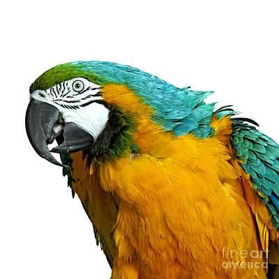 Macaw Bird Poster