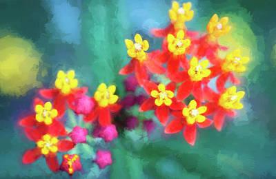 Milkweed Flowers Poster