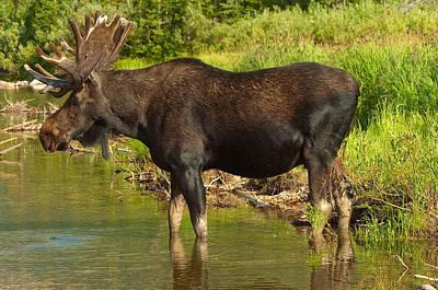 Moose Poster by Sebastian Musial