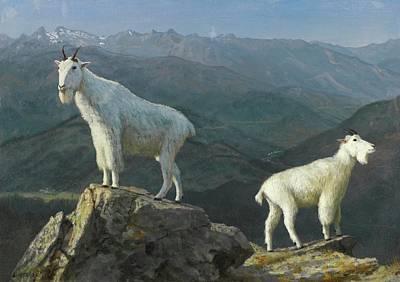 Mountain Goats Poster by Albert Bierstadt