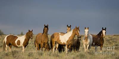Mustangs In Nevada Poster by Jean-Louis Klein & Marie-Luce Hubert