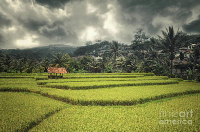 Poster featuring the photograph Paddy Field by Charuhas Images