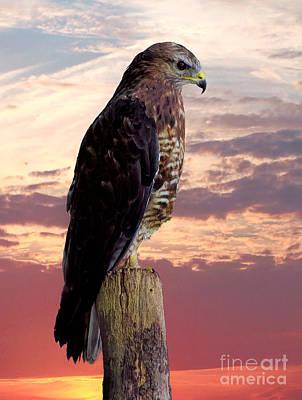 Peregrine Falcon Poster by Lynn Bolt