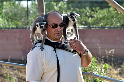 Photographer With Lemurs On Him Poster